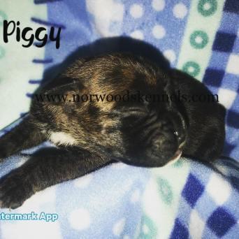 miss piggy 1